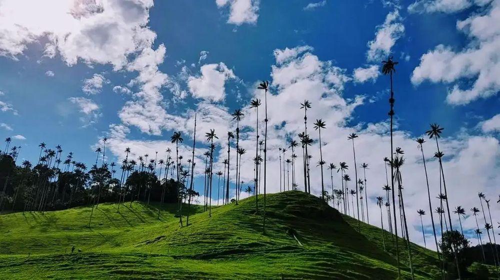 Parque Natural Valle del Cocora