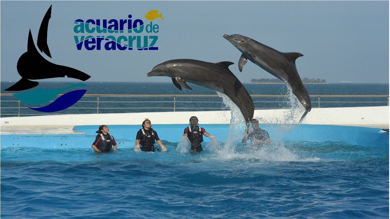 Visita el Acuario de Veracruz