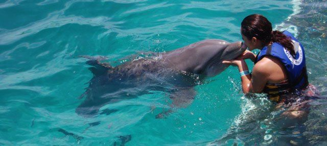 Come swim with dolphins