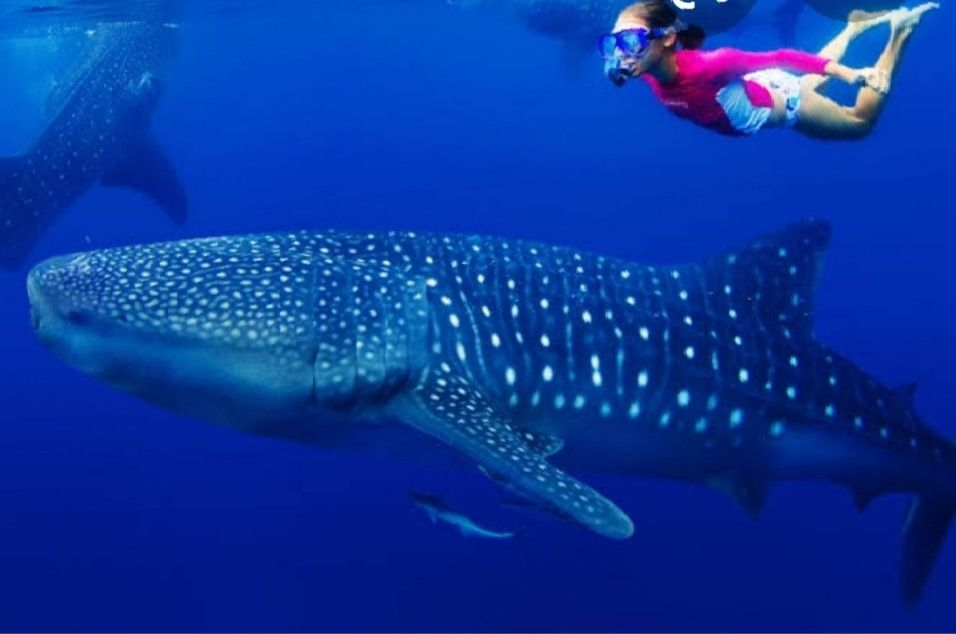 What to do in Isla Mujeres?